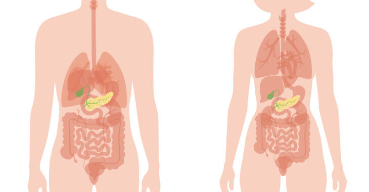 pancreas location in the body